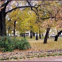 Осенний мотив :: vadim