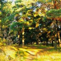 Солнечная дорожка в лесу. :: Сергей Банков