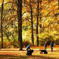 Золотая осень в парке :: Любовь Изоткина