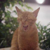 весельчак!-из серии Кошки очарование мое! :: Shmual Hava Retro