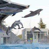 Батумский дельфинарий :: Ruslan Nalsur