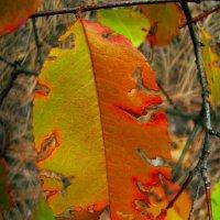 Осень рисует :: Алина