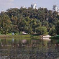 Пруд в парке :: Константин Фролов