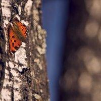 бабочка :: Юлия Аверьянова