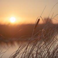 Морозное утро :: Евгений Кузнецов