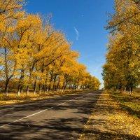 Золотая осень :: Алексей Яковлев