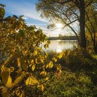 Осенний свет :: Алексей Соминский
