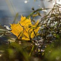 Лёгкость осеннего листа :: Алексей Соминский