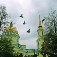 Не пугайте люди голубей :: Владимир Максимов