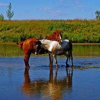 С мамой на реке :: Владимир Максимов