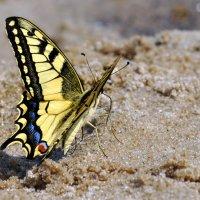 бабочка :: Татьяна Плутахина