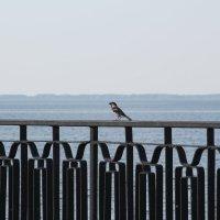 #sparrow :: Anna Sergeeva