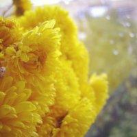 Дождливое счастье... :: Катюшка Пескова