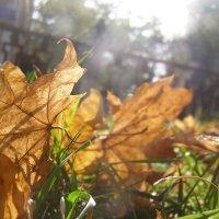 Осень... :: Катюшка Пескова