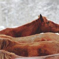 horse :: Sasha Vlasova