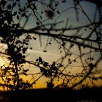 Вечером красив закат, слышен ягод аромат... :: Мила Солнечная