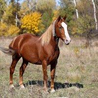 Рыжий конь :: Нилла Шарафан