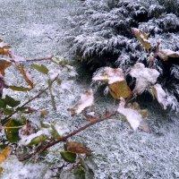 снег... :: Валерия Яскович