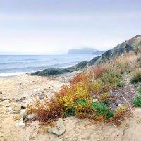 цвета осеннего берега :: viton