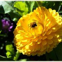 Вспоминая о лете :: galina tihonova