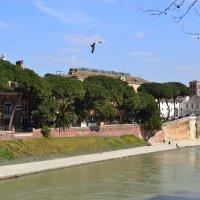 Italy, Rome, river Tiber :: Marina Kuznetsova