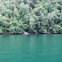 Зеленая вода :: Ольга Иргит