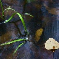 Лист и лёд. :: Валерий Молоток