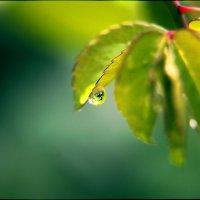 Капля дождя :: Александр Макаревич