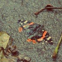 Метелик :: Alina Bondar