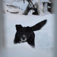 Пёс :: Mария Семенова