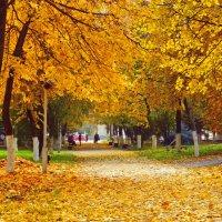 золото осени :: ольга хадыкина