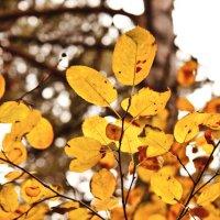 Сибирская осень :: Женя Романова