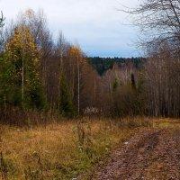 Лес в октябре-1 :: Валерий Молоток