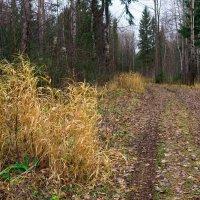 Лес в октябре-2 :: Валерий Молоток