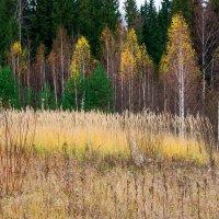 Лес в октябре-3 :: Валерий Молоток