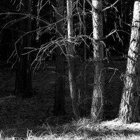 В лесу :: Igor Zau
