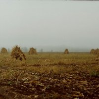 поле :: Олег Марусик