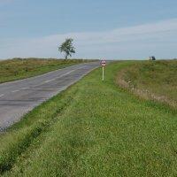 День, дорога, знак, дерево :: Андрей Гамарник