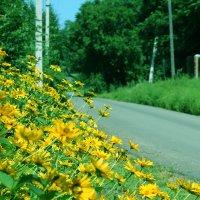 Las flores :: Julia B