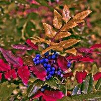Кислые ягоды. :: Edward J.Berelet