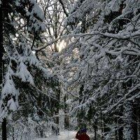 Красота зимнего леса :: Борис Русаков