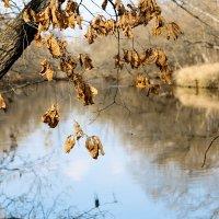Осень над рекой... :: Виталий Левшов