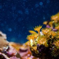 морские глубины :: Yana Popova
