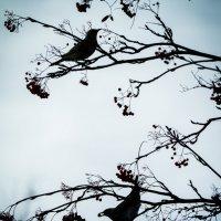 японские мотивы :: Соня Орешковая (Евгения Муравская)