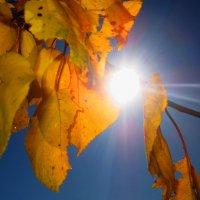 золотая осень :: юлия 878787