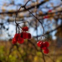 Осень. :: Евгений Тайдаков