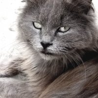 cat :: Юлия Богданова