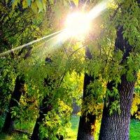 Солнечные дни :: Екатерина Саенко