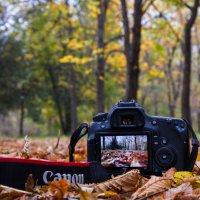 В объективе Осень! :: Vadim77755 Коркин
