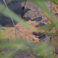 Осенний лист :: Жорж Колпаков